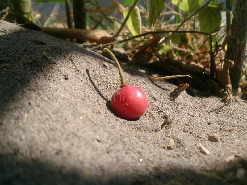 Chery owocowy karmowy delecius zdjęcie royalty free