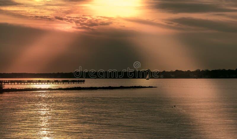 Chesapeake złoto obraz stock