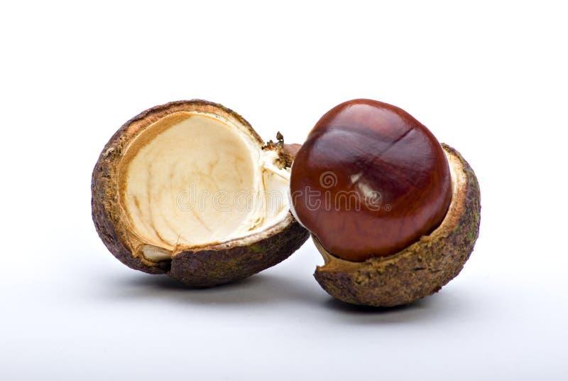 chesnut royaltyfria foton