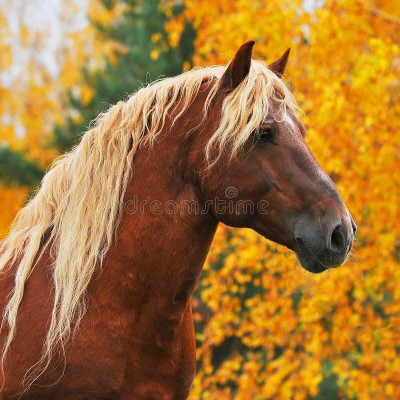 Download Chesnut horse in autumn stock photo. Image of leaf, orange - 14593306