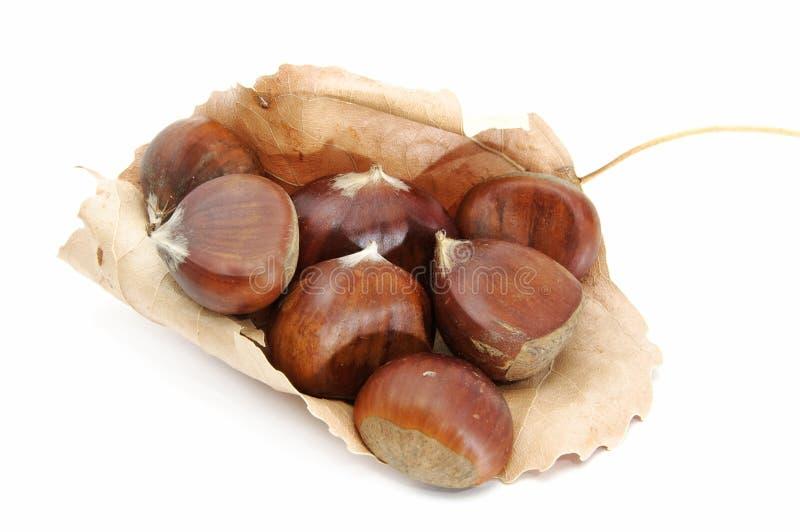 Chesnuts royaltyfri fotografi