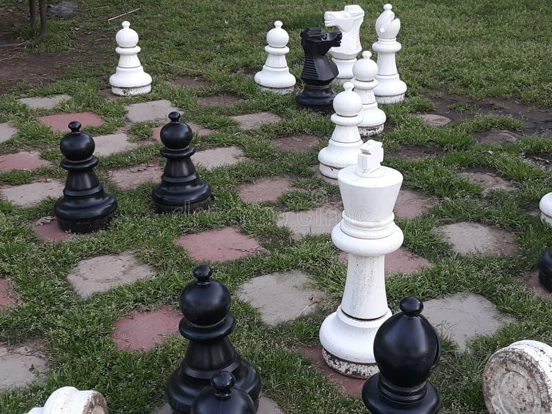 Chess Alguém? imagens de stock