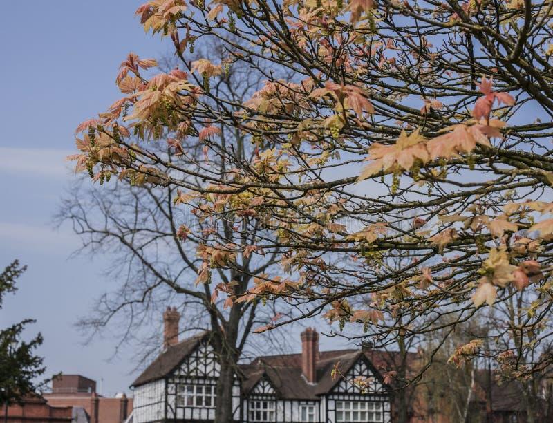Chester England, UK - i parkera arkivbild