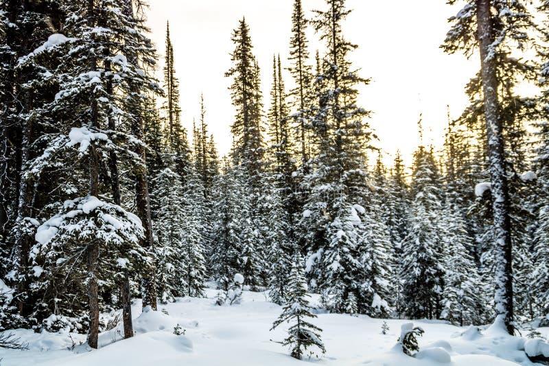 Chester Lake, Peter lougheed le parc provincial, Alberta, Canada image libre de droits