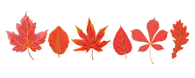 Chestn вишни клена падения стиля акварели осени вектора сезонное иллюстрация штока