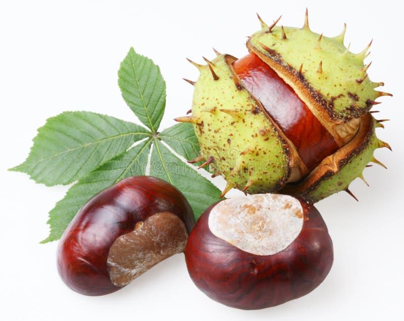 Download Chestnut stock photo. Image of autumn, tasty, botanic - 11161930