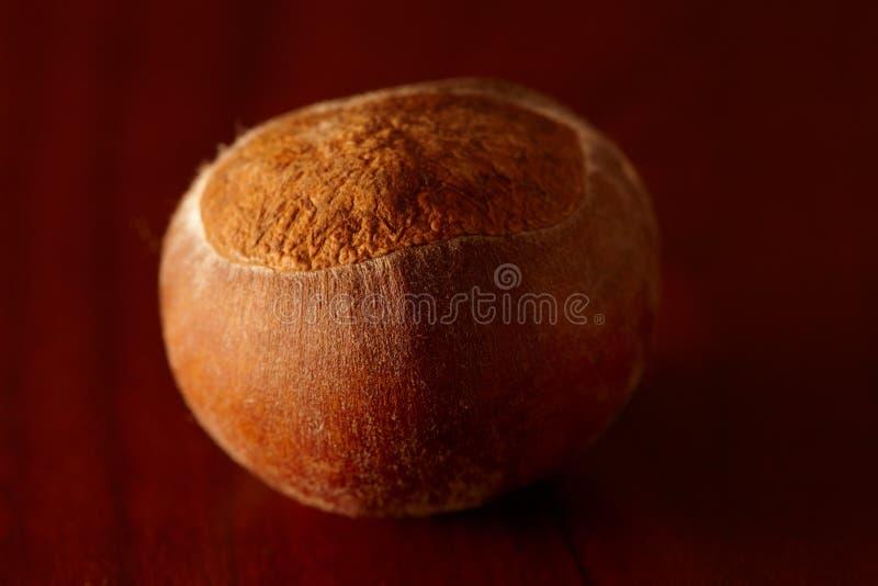 Download Chestnut stock image. Image of chestnut, nutshell, fruit - 17471875
