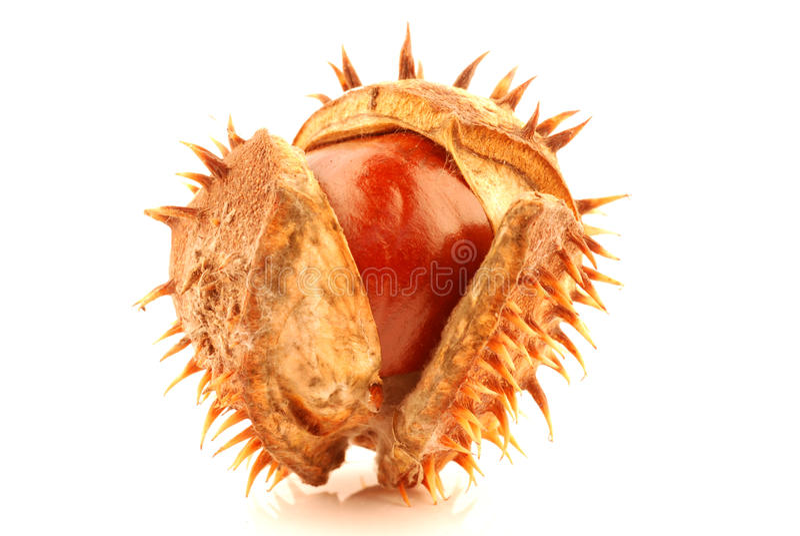 Download Chestnut stock photo. Image of decoration, freshness - 21575916