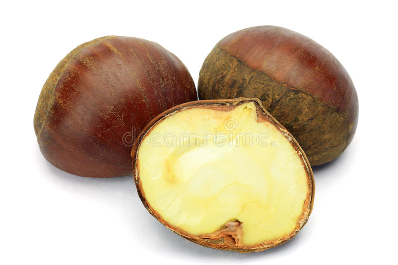 Chestnut stock photography