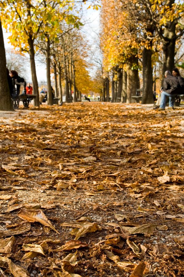 A chestnut alley, autumn in Paris royalty free stock images