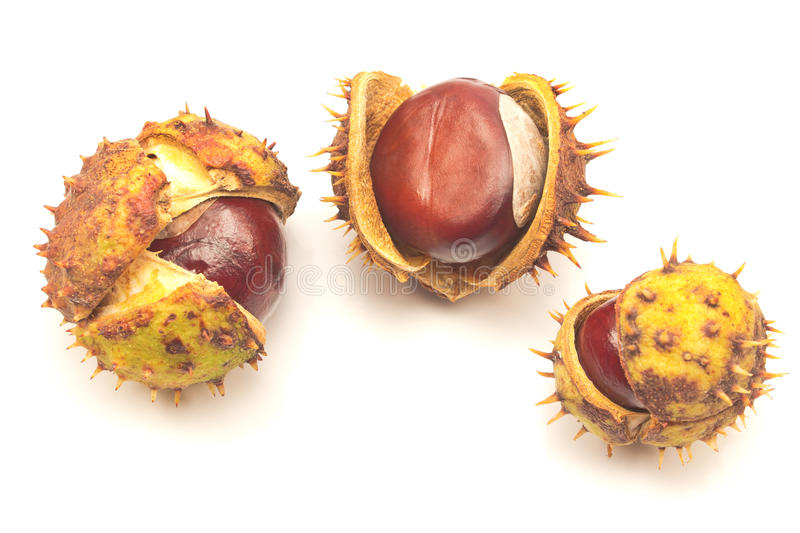 Chestnut berries isolated. On white royalty free stock photography