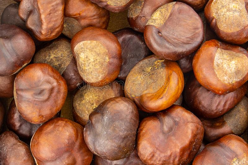 Chestnut edible large brown fruit with sweet flesh delicacy baked delicious background culinary design royalty free stock photography