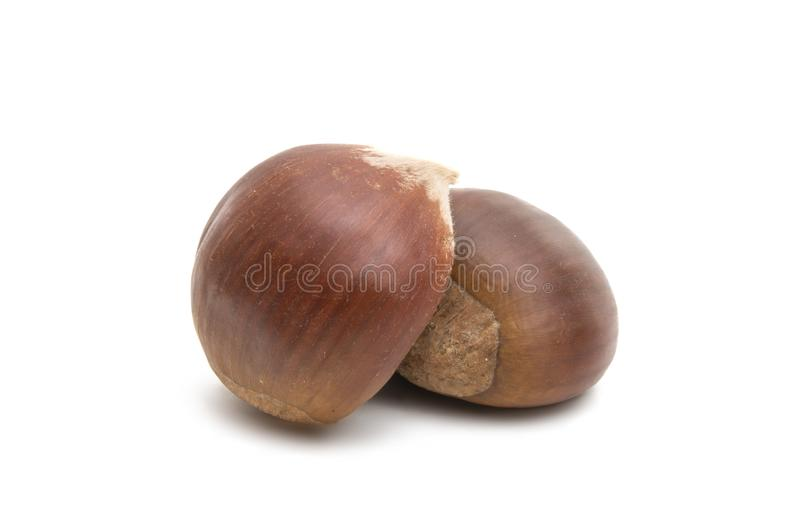 chestnut edible royalty free stock photography
