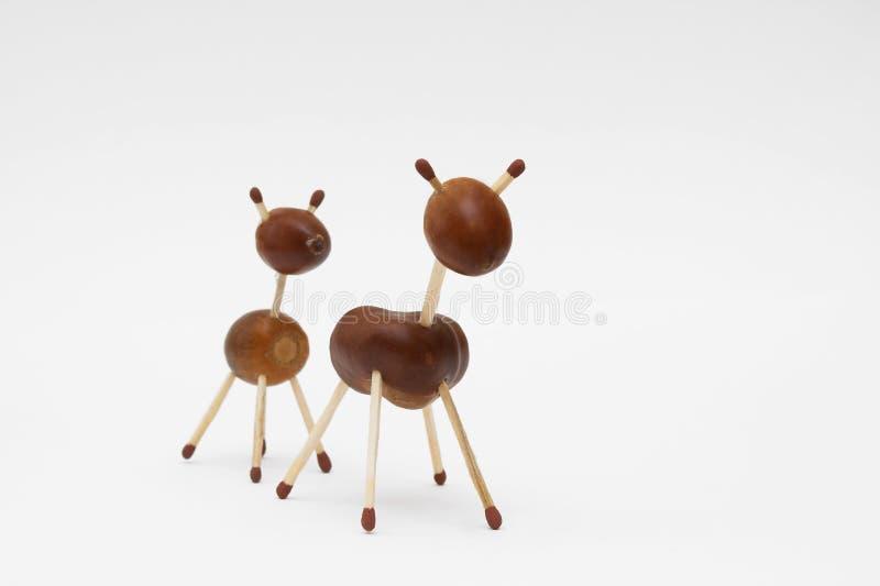 Chestnut familly stock photos