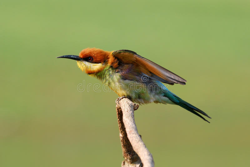 Collection of High Quality Bird Pictures Photos ... - photo#21