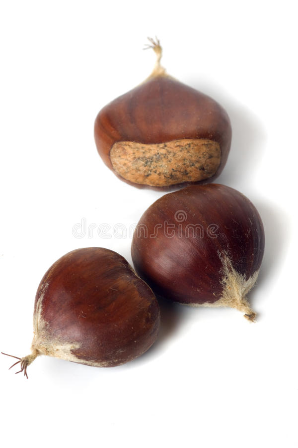 Chestnut isolated on white. Close up image of three chestnut isolated on white background royalty free stock photography