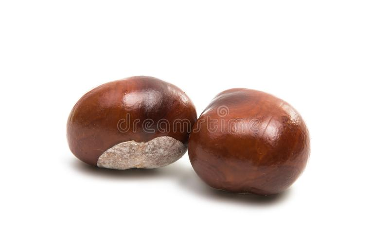Chestnut isolated. On white background royalty free stock images