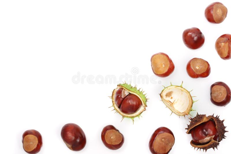 Chestnut isolated on white background with copy space for your text. Top view stock photography