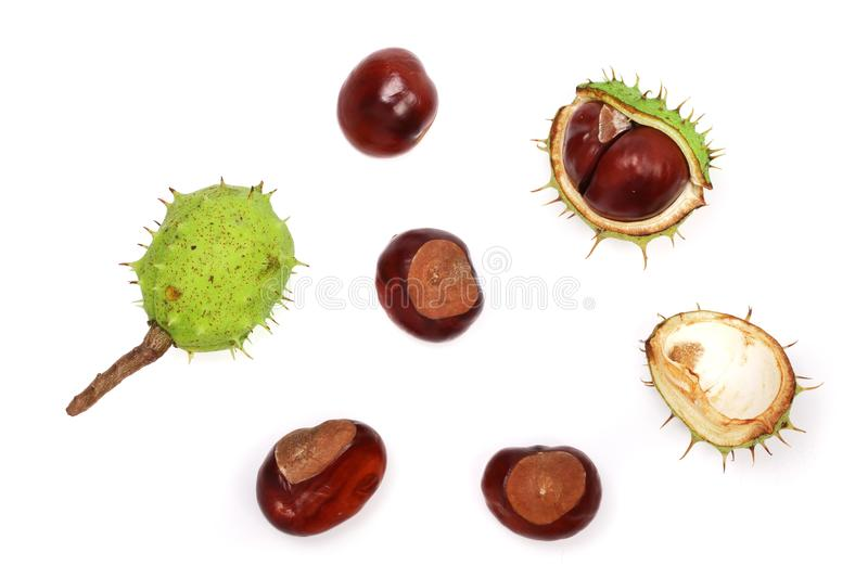 Chestnut isolated on white background. Top view.  royalty free stock photography