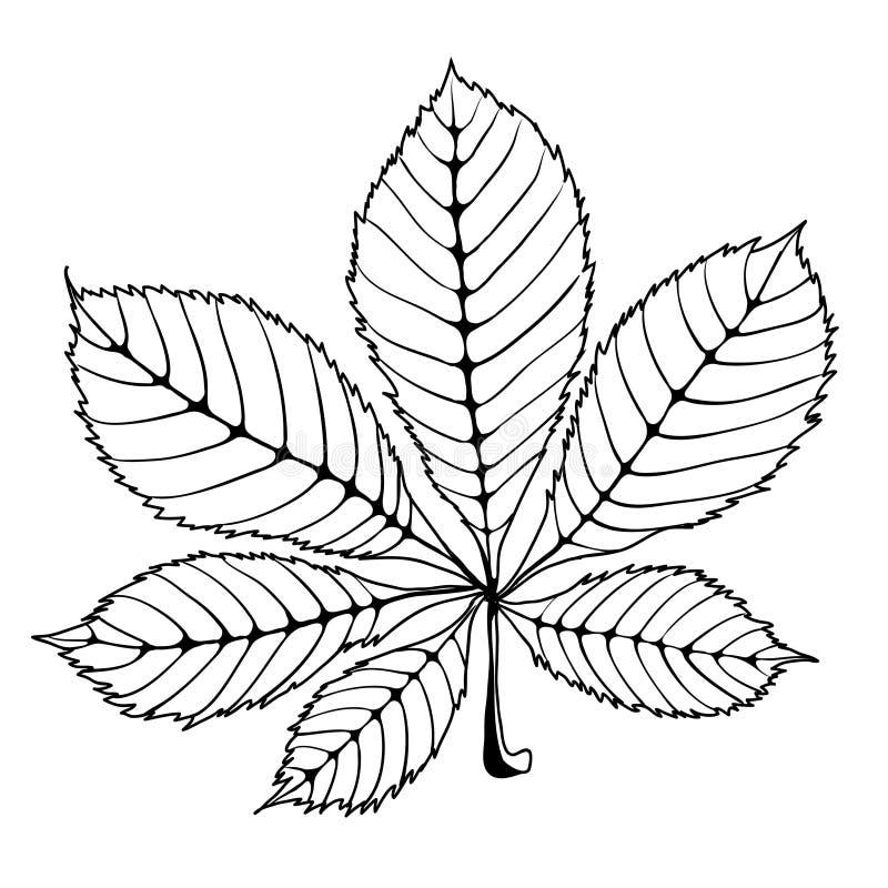 chestnut leaf stock vector illustration of card