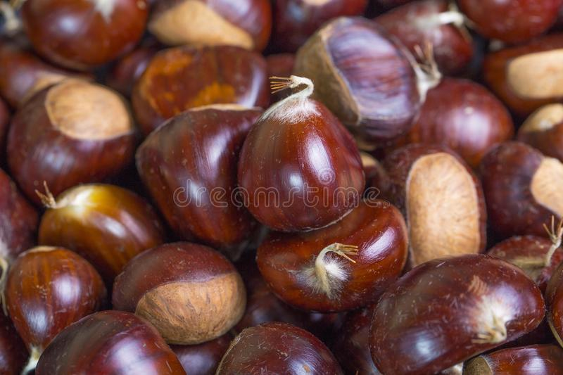 Chestnut. Macro picture of a group of chestnut fruit royalty free stock photography