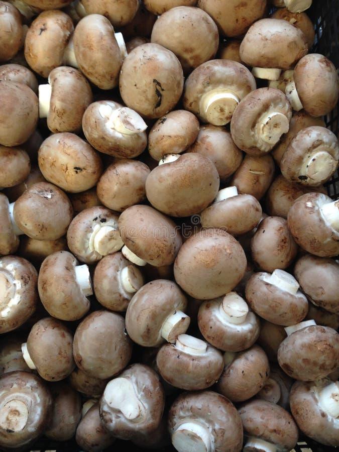 Chestnut Mushrooms royalty free stock photo