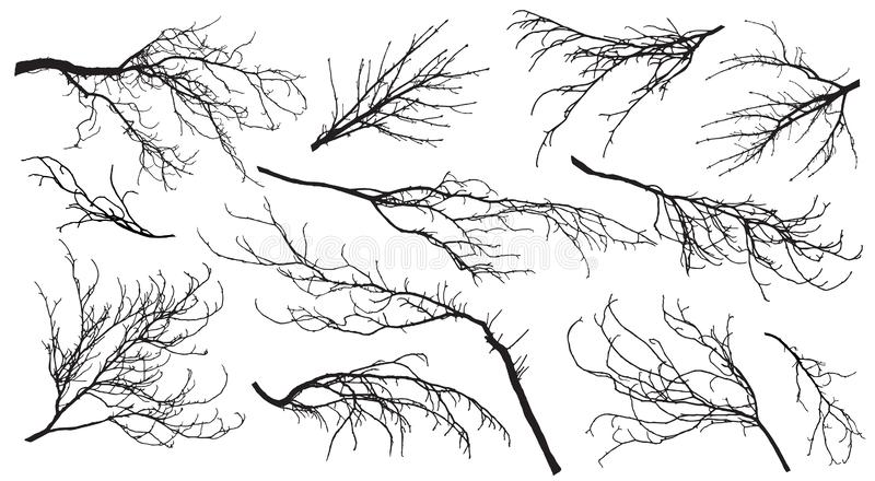 Chestnut, poplar, maple, oak and etc. branches trees. Set of silhouettes. Vector illustration.  vector illustration