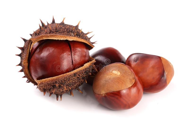 Chestnut in the skin isolated on white background closeup.  royalty free stock images