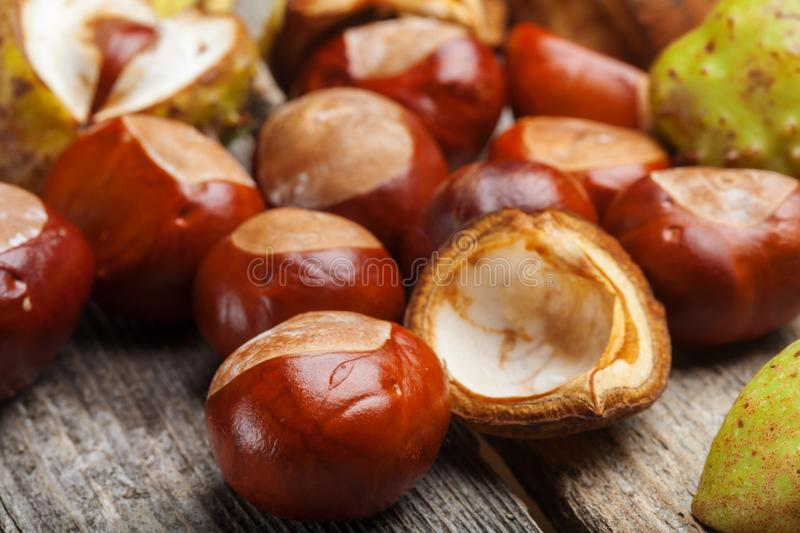 Chestnut on the table stock photo