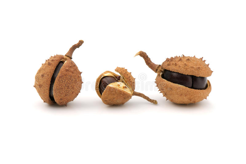 Download Chestnuts stock image. Image of background, dried, chestnut - 11815661
