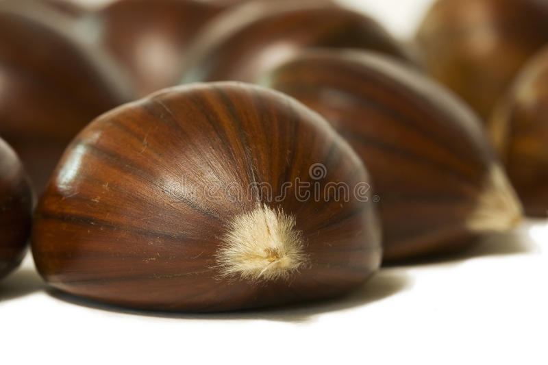 Download Chestnuts stock image. Image of cultivation, agricultural - 16512825