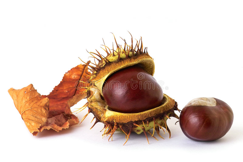 Download Chestnuts stock image. Image of closeup, nuts, chestnuts - 272929