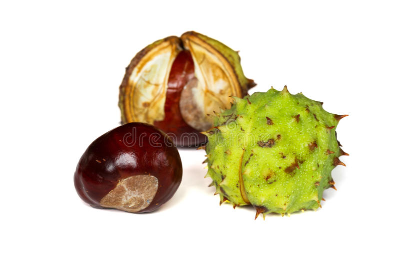 Download Chestnuts stock image. Image of objects, nobody, husk - 28363359