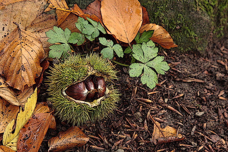 Chestnuts autumn stock image