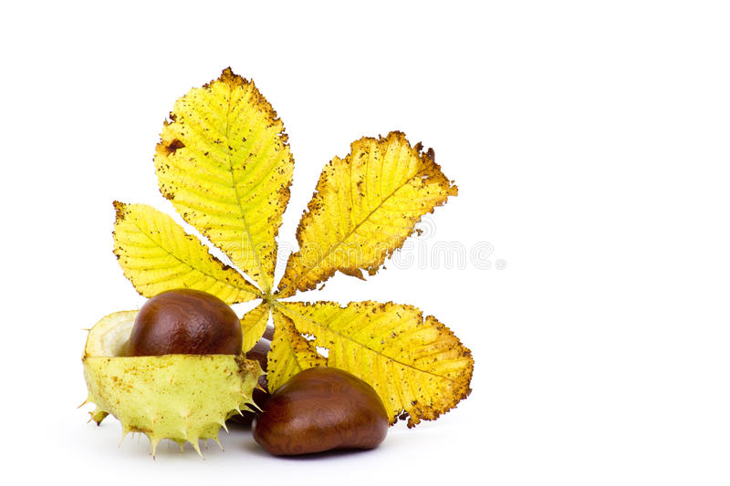 Chestnuts and autumn leaves stock image
