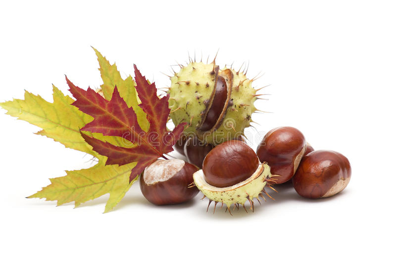 Chestnuts and autumn leaves stock photos