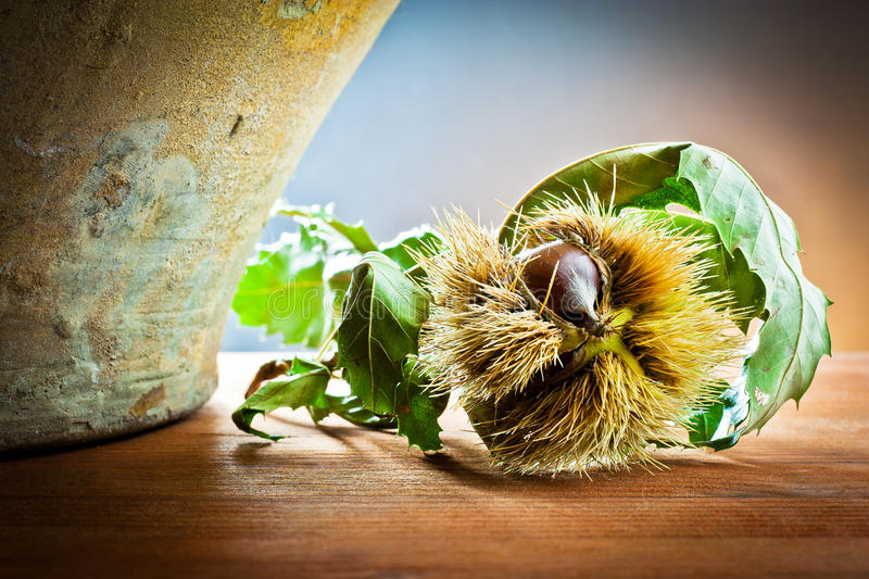 Chestnuts in autumnal atmosphere royalty free stock photography