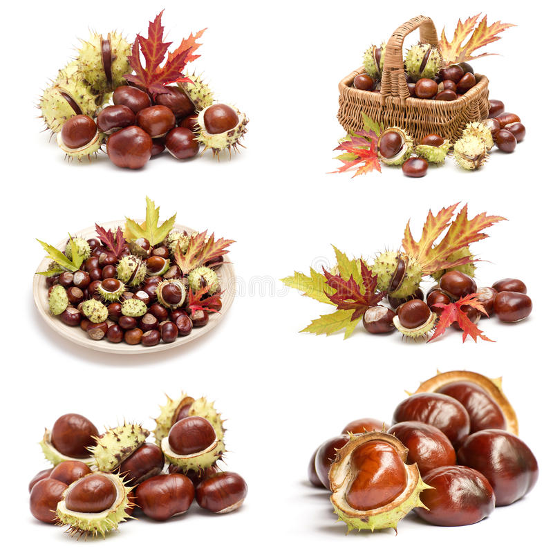 Chestnuts and autumnal leaves royalty free stock images