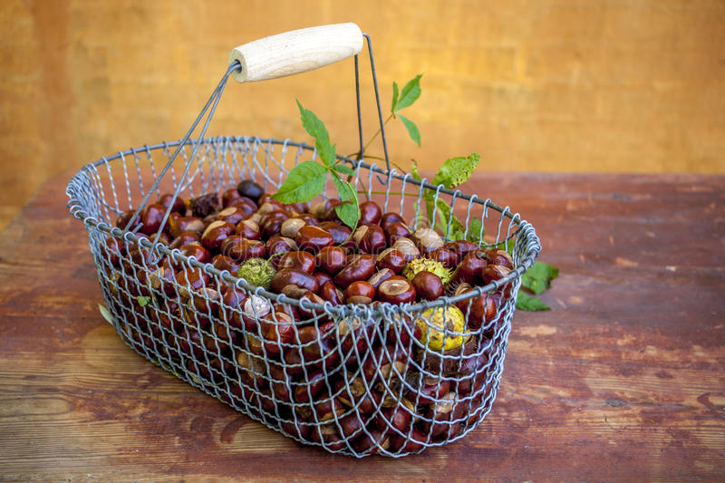 Chestnuts in a basked stock image