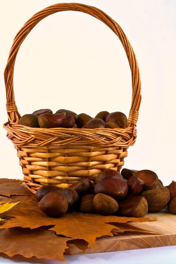 Download Sweet chestnuts stock photo. Image of fall, seasonal - 27766262