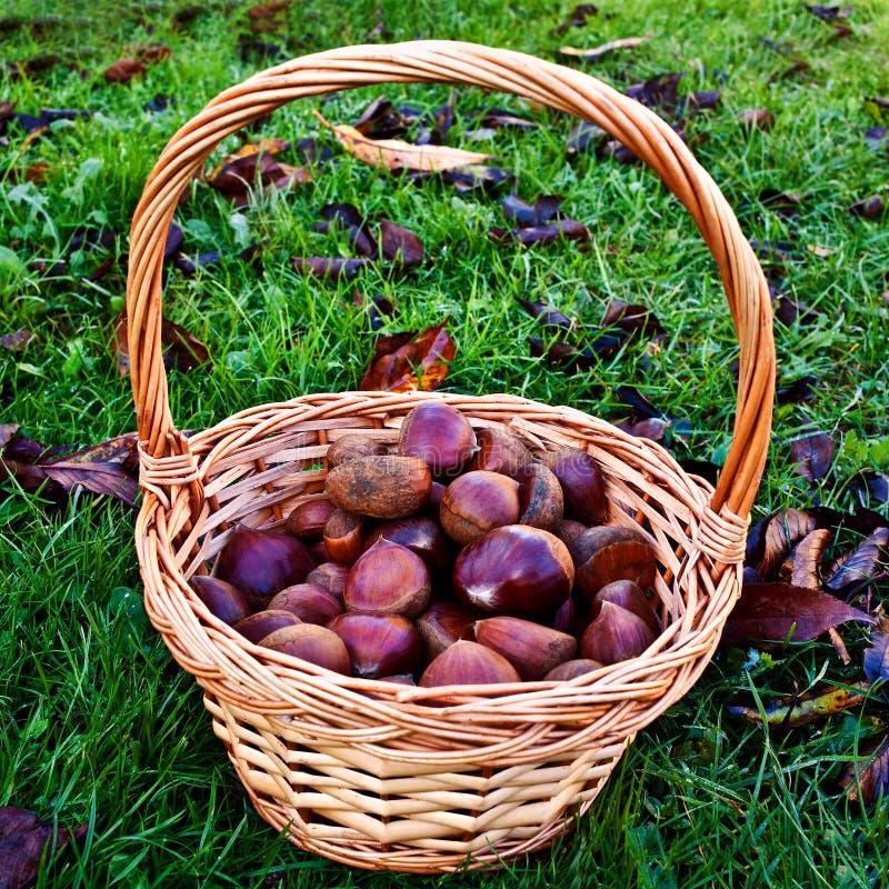 Download Chestnut harvest stock image. Image of organic, nuts - 27842061
