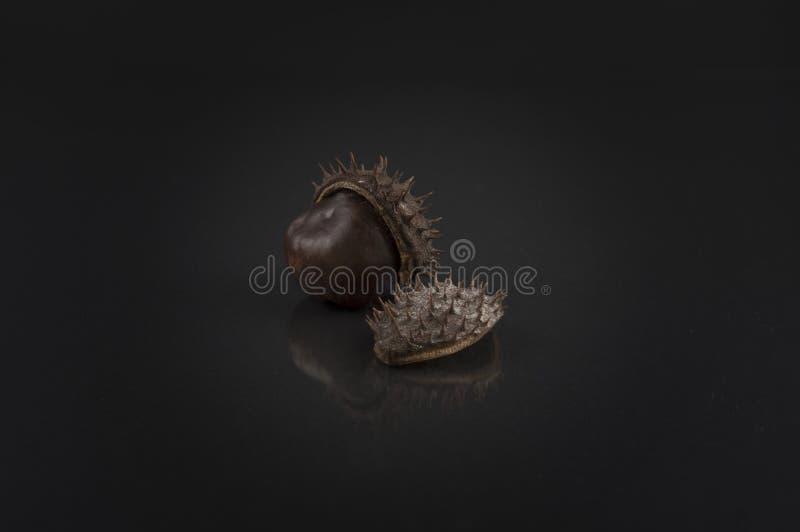 Chestnuts on black. Artistic horse-chestnut photo stock photos