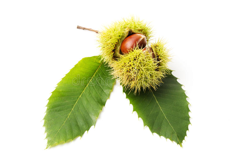 Download Chestnuts close-up stock image. Image of season, food - 39513203