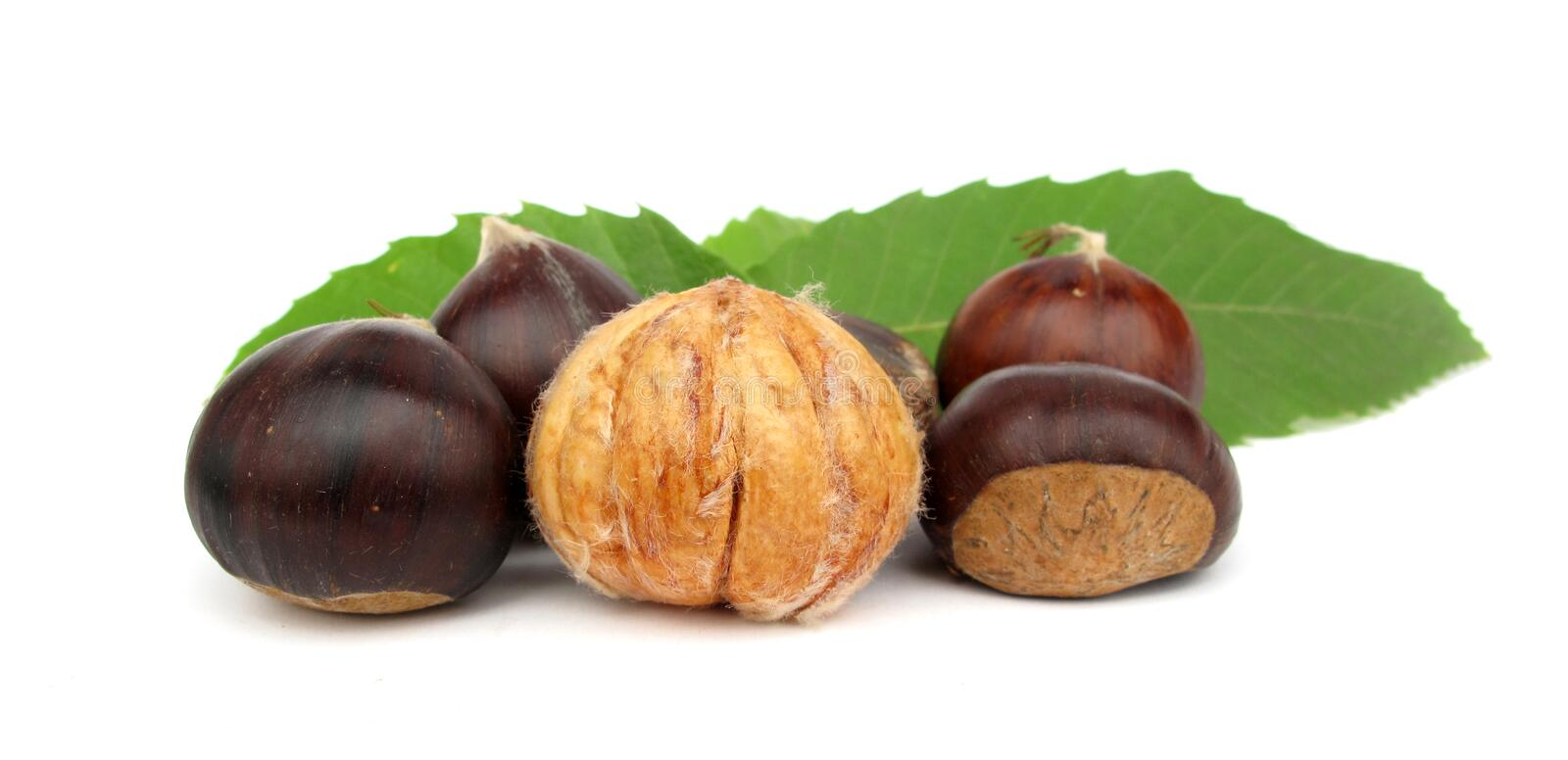Chestnuts edible nuts on white. The Sweet Chestnut (Castanea sativa, family Fagaceae), also known as the Spanish Chestnut, Portuguese Chestnut or European royalty free stock images