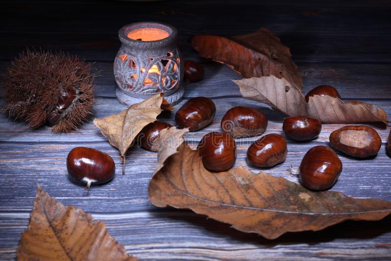 Chestnuts, fruits of winter stock images