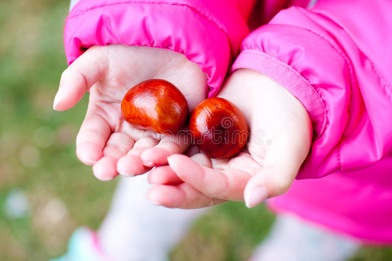 Chestnuts in hand stock images