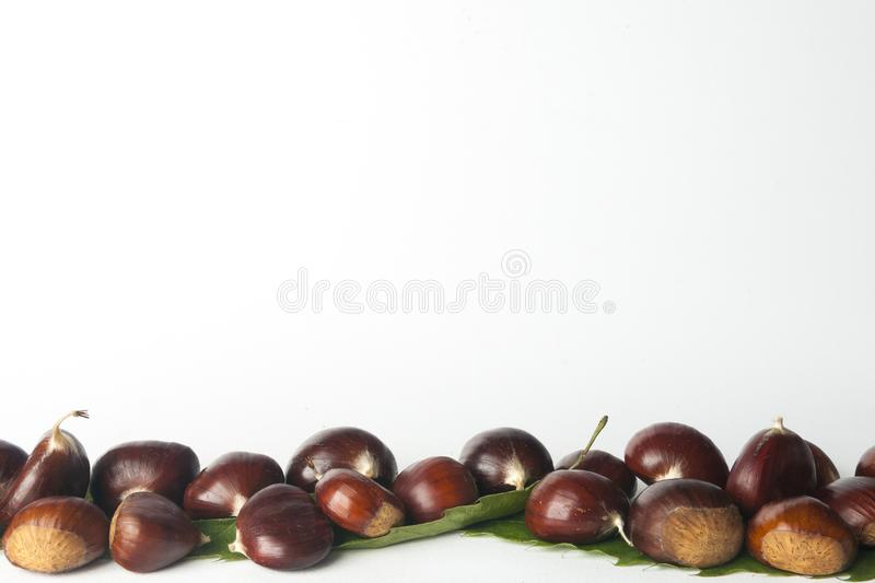 Chestnuts isolated. On white background royalty free stock image