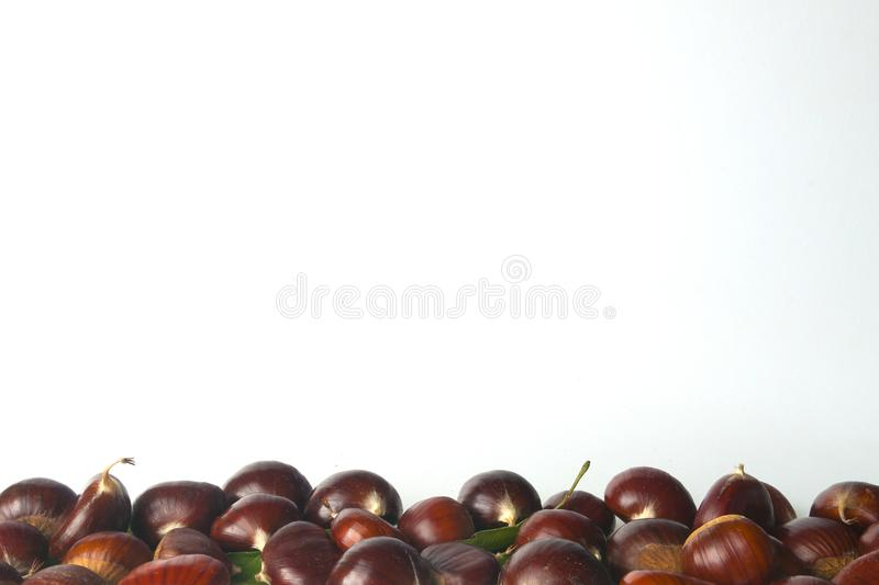 Chestnuts isolated. On white background royalty free stock photo