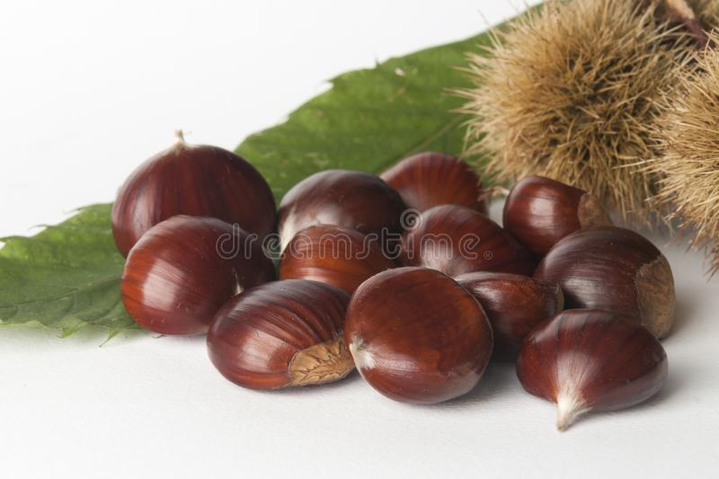 Chestnuts isolated. On white background stock photography