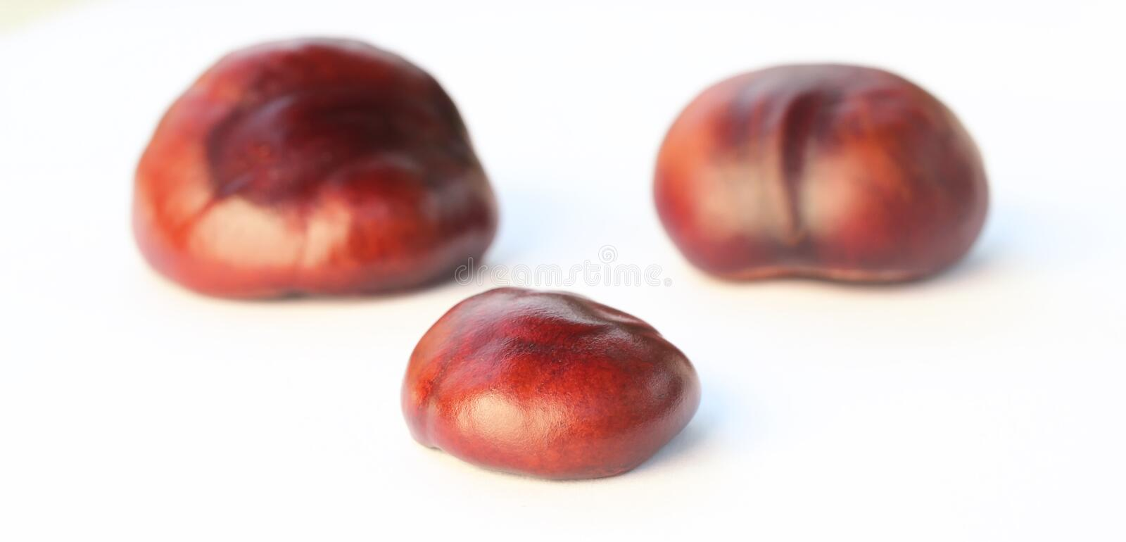 Chestnuts isolated on white background.  stock photo